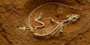 paleontology_dynamic_lead_slide